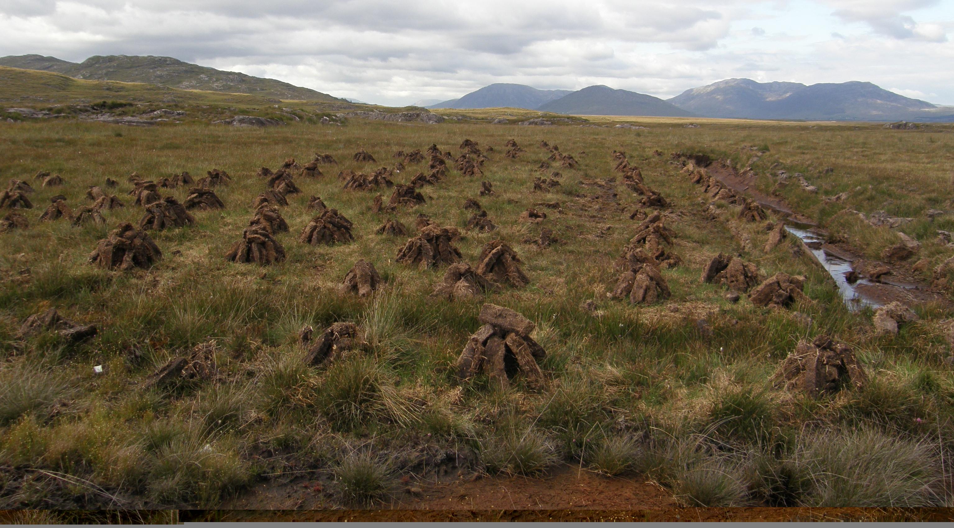 Field of Footings