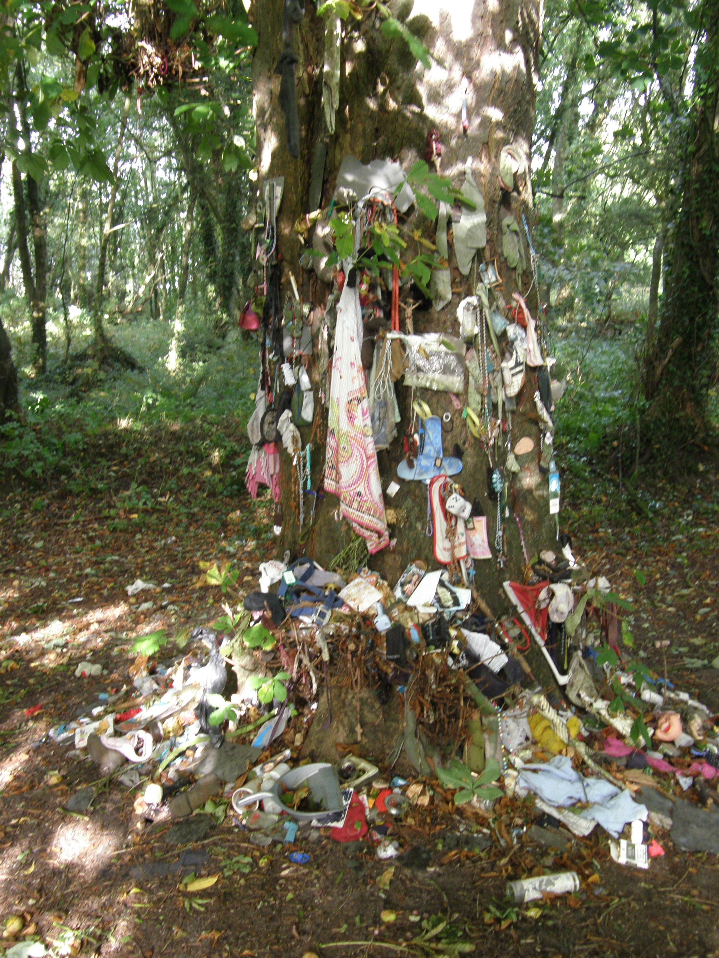"St. Brendan's ""Wishing Tree"", Clonfert, Co. Galway, Ireland"