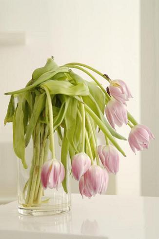 Wilted Flower Arrangement
