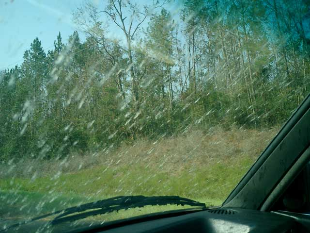 Windshield with Bugs