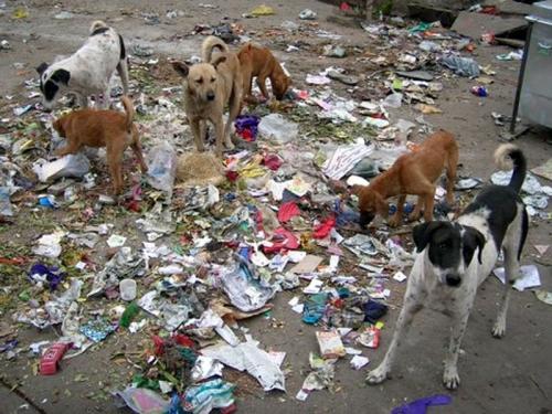 Feral Dog Pack